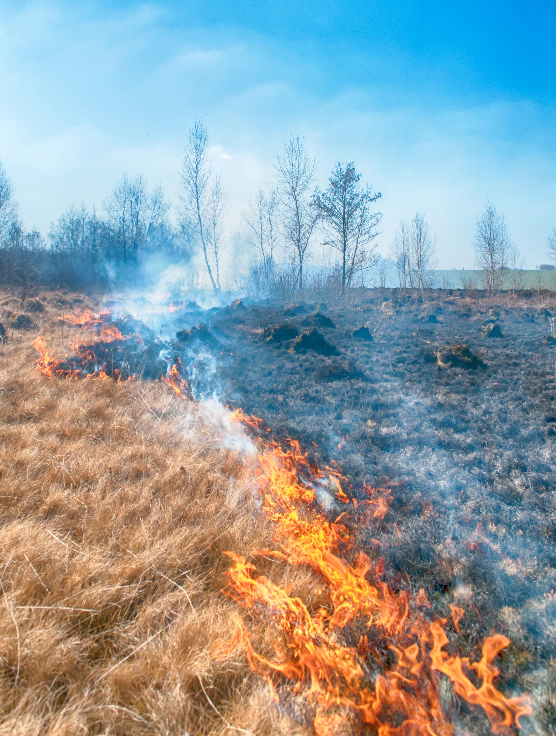 אש בשדה