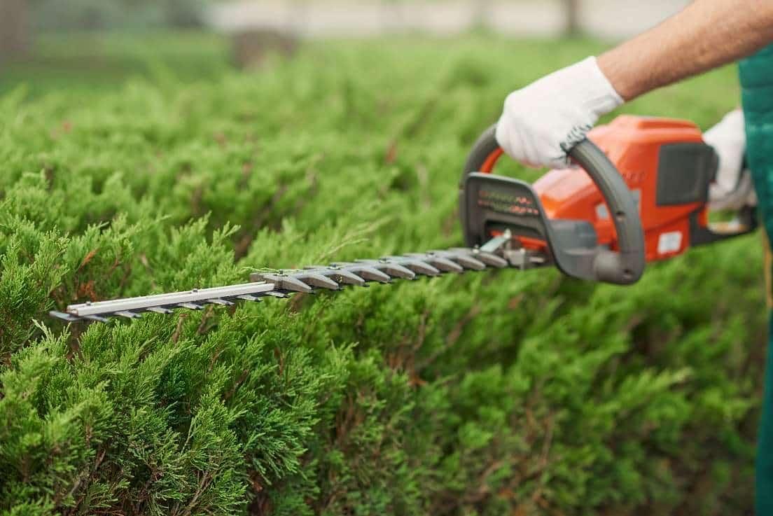 כיסוח דשא וגיזום גדר חי בשנת השמיטה