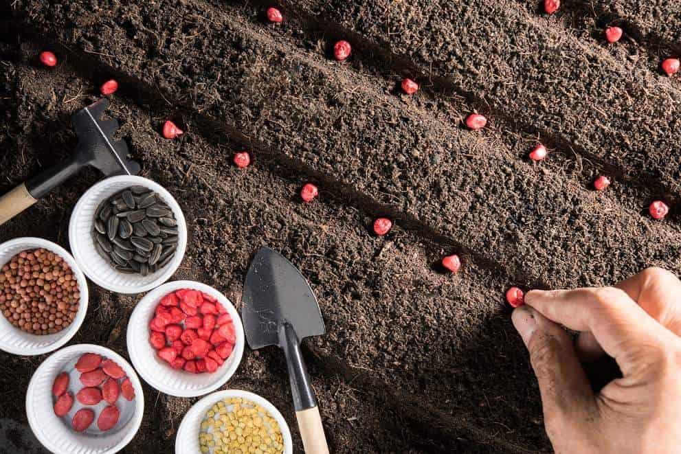 זריעה לשם בדיקת הזרעים והדגמה