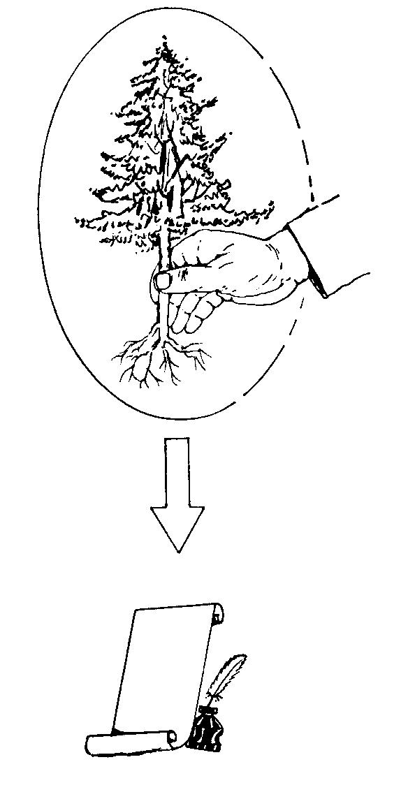 נטיעת עצי סרק