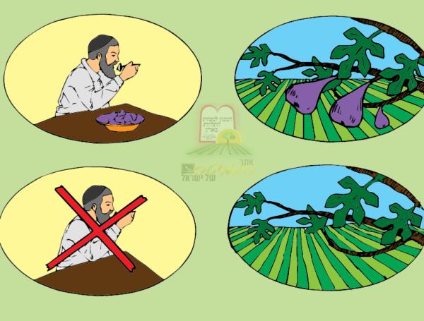 """הלכות ביעור פירות שביעית – הגר""""ח קנייבסקי"""