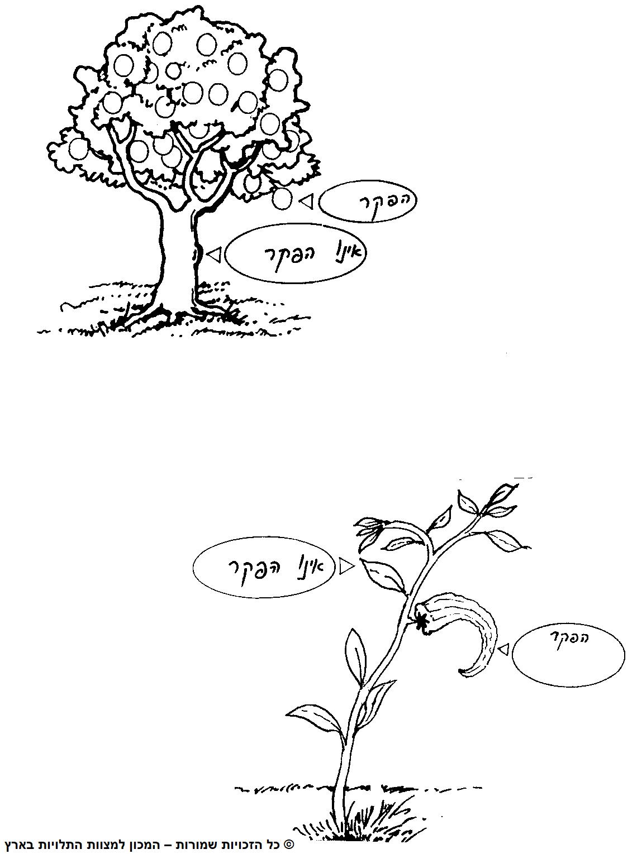 הפקר על הפירות בלבד ולא על העצים והענפים