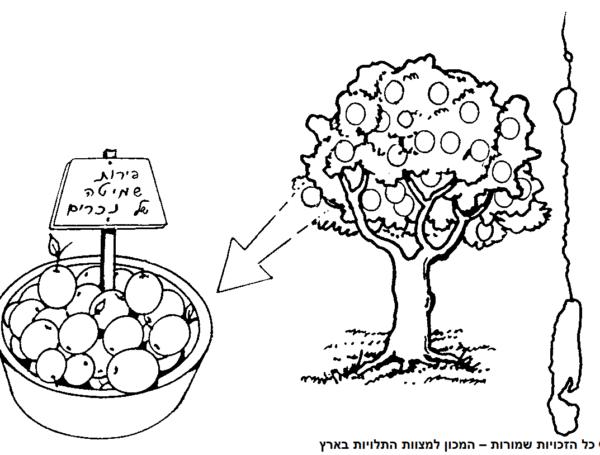 שביעית בקרקע גוי וביבוליו – יבול נכרי