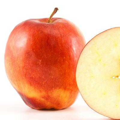 תפוח מבכיר