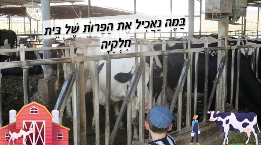 להאכיל את הפרות